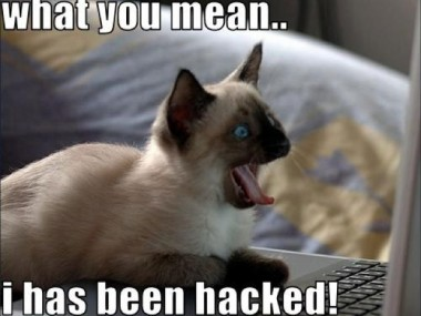 lolcat_hacked-feature